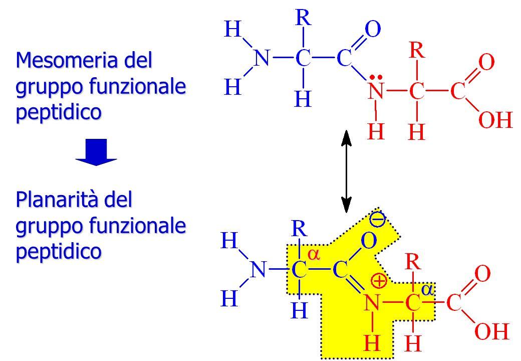 Mesomeria del gruppo funzionale peptidico Planarità del gruppo funzionale peptidico a a