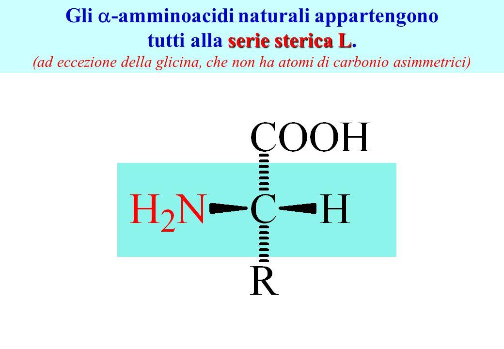 Gli a-amminoacidi naturali appartengono tutti alla serie sterica L.