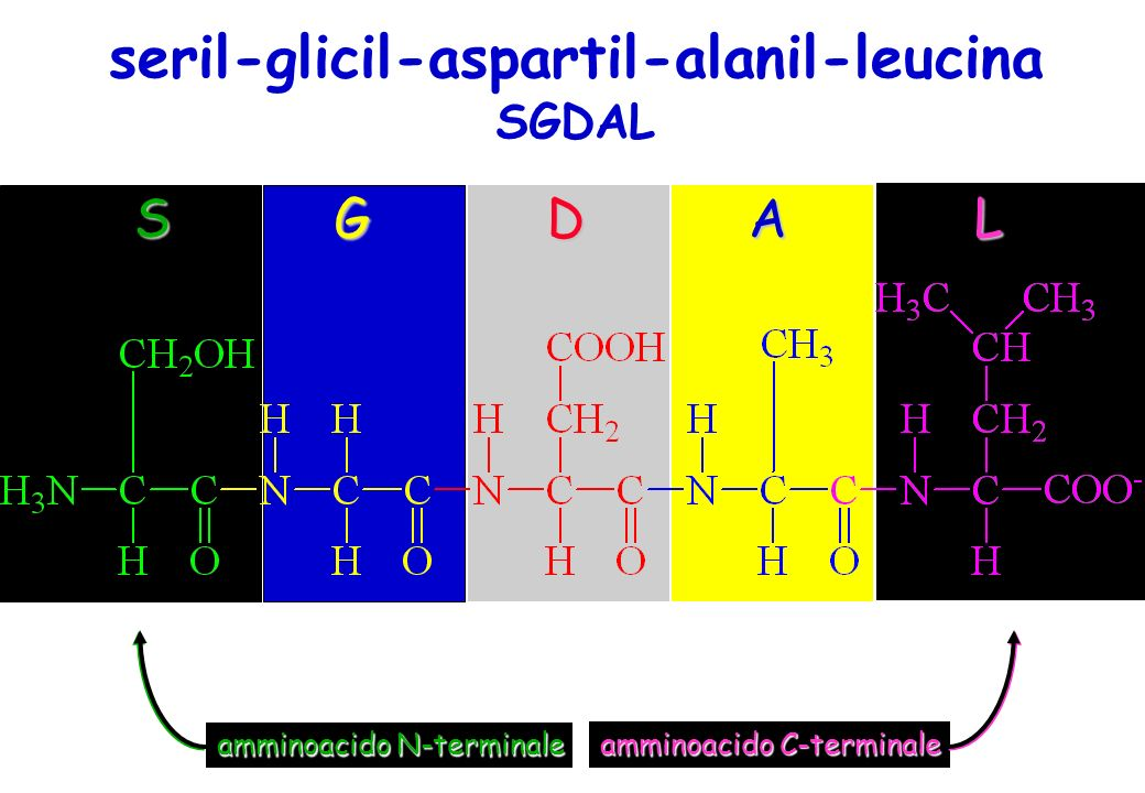 seril-glicil-aspartil-alanil-leucina