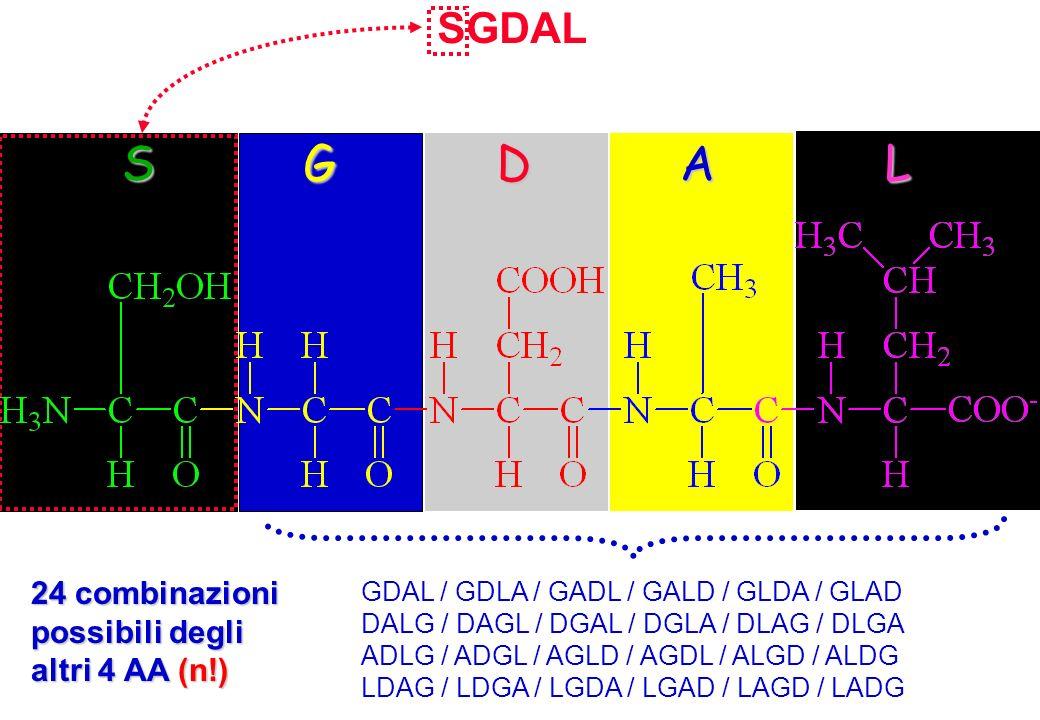 S G D A L SGDAL 24 combinazioni possibili degli altri 4 AA (n!)