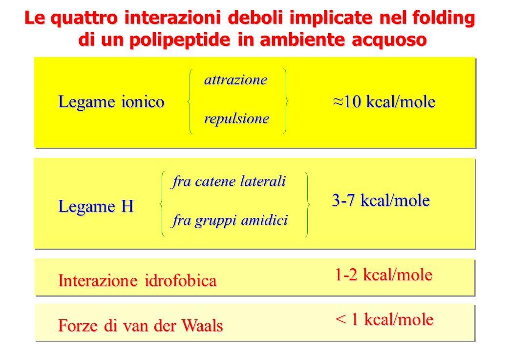 Le quattro interazioni deboli implicate nel folding