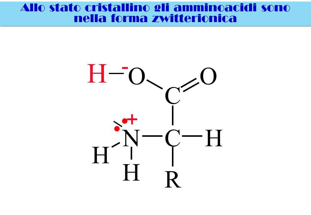 H O O C N C H H H R - + Allo stato cristallino gli amminoacidi sono