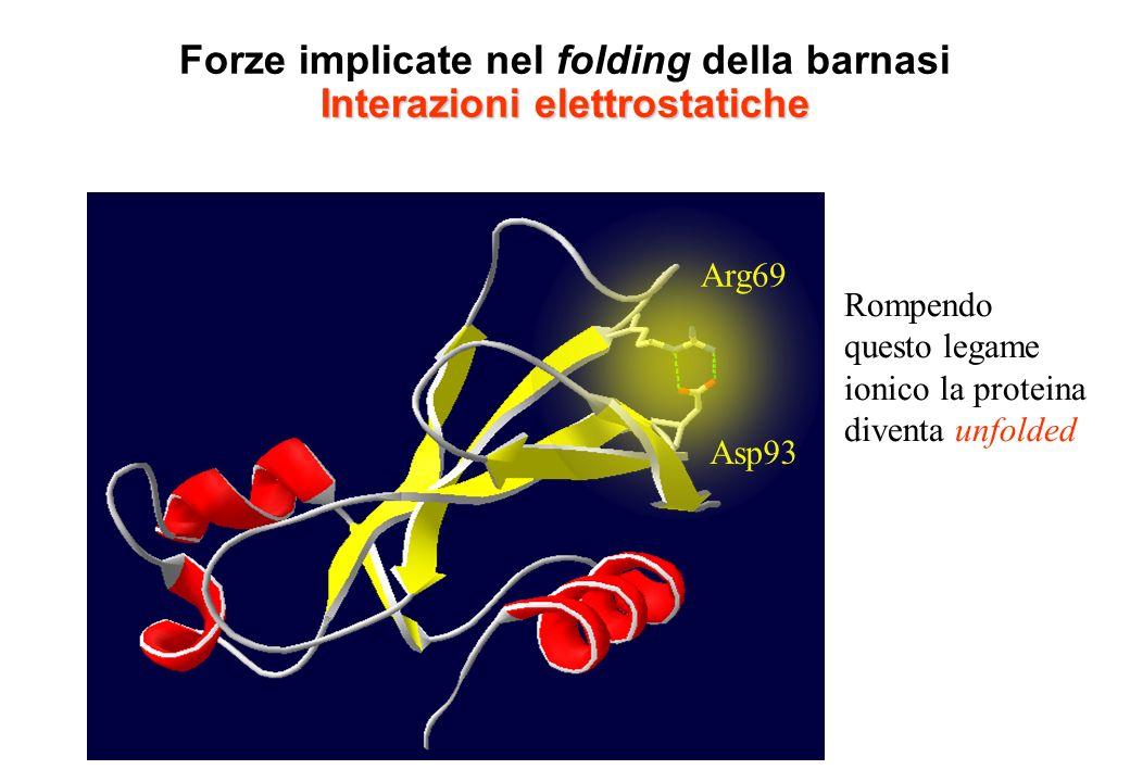 Forze implicate nel folding della barnasi Interazioni elettrostatiche