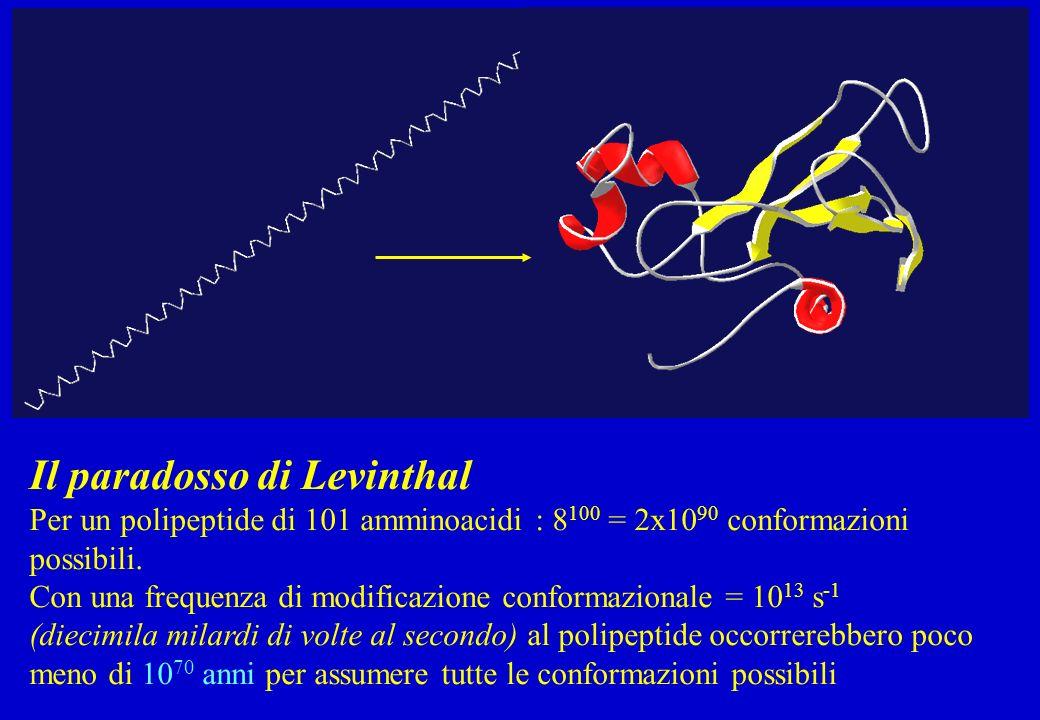 Il paradosso di Levinthal