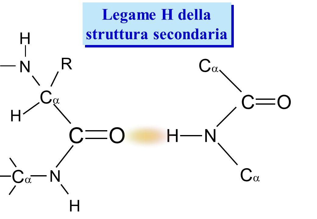 C O C O Ca Ca H N Ca Ca Legame H della struttura secondaria H R N H N