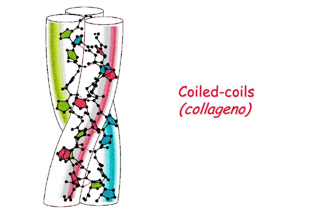 Coiled-coils (collageno)