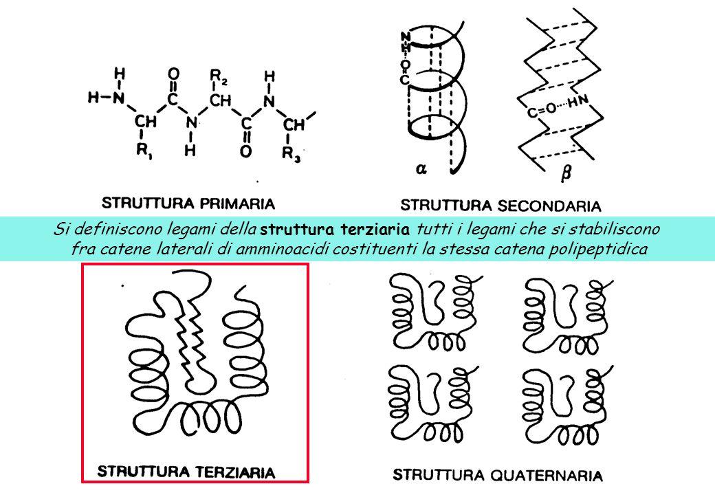 Si definiscono legami della struttura terziaria tutti i legami che si stabiliscono