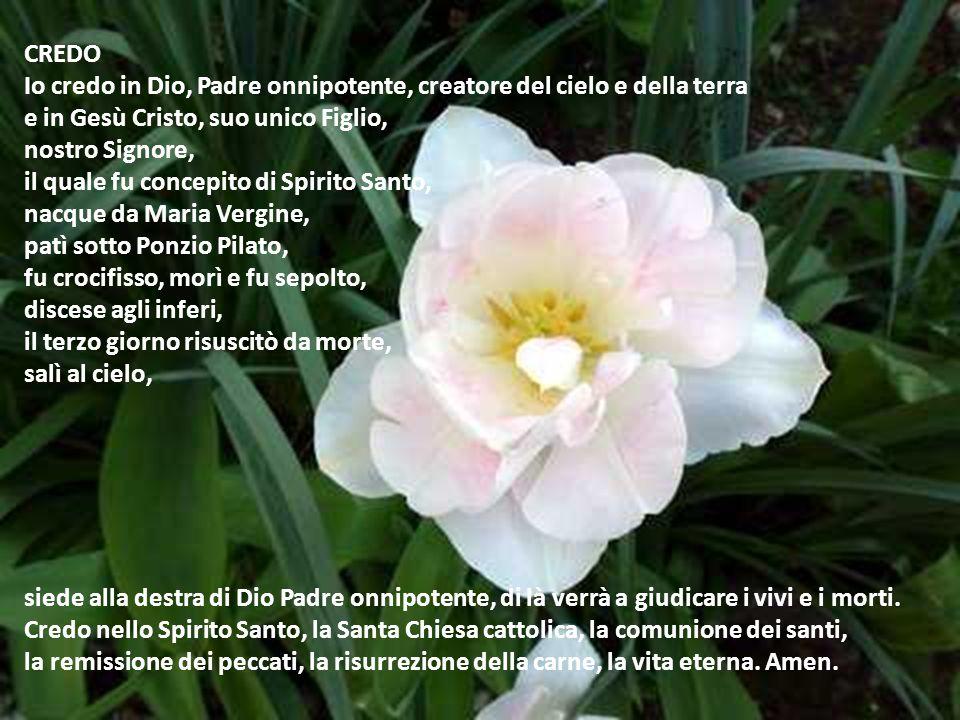 CREDO Io credo in Dio, Padre onnipotente, creatore del cielo e della terra. e in Gesù Cristo, suo unico Figlio,