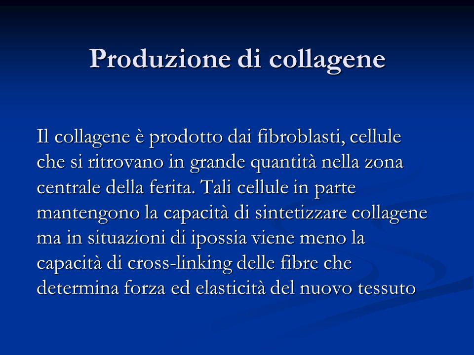 Produzione di collagene