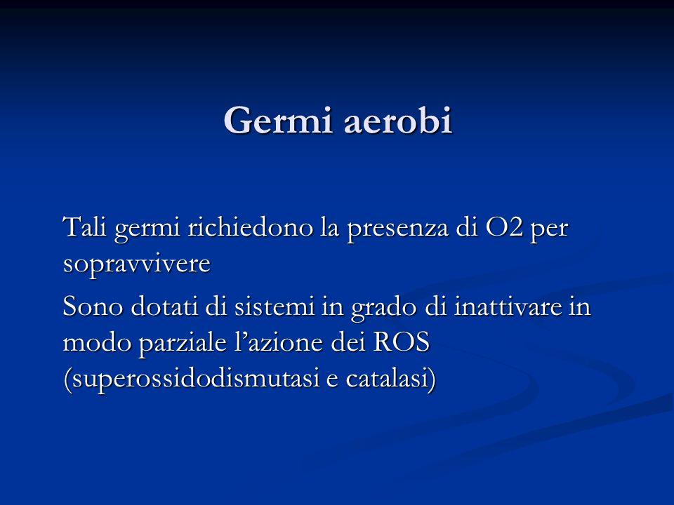Germi aerobi