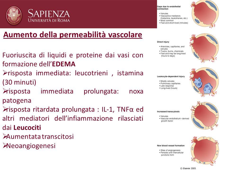 Aumento della permeabilità vascolare
