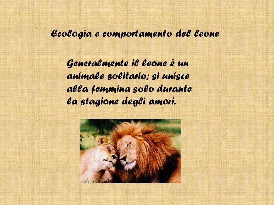 Ecologia e comportamento del leone