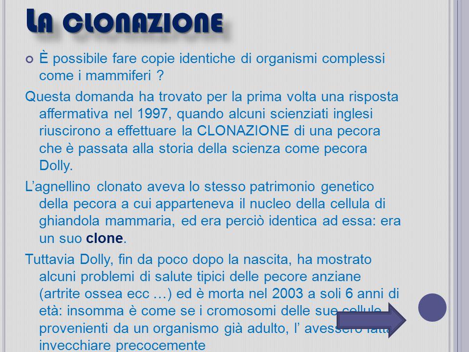 La clonazione È possibile fare copie identiche di organismi complessi come i mammiferi