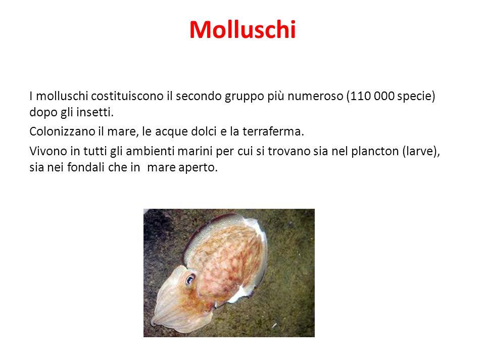 Molluschi I molluschi costituiscono il secondo gruppo più numeroso (110 000 specie) dopo gli insetti.