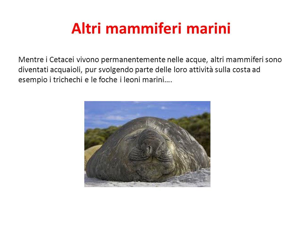 Altri mammiferi marini