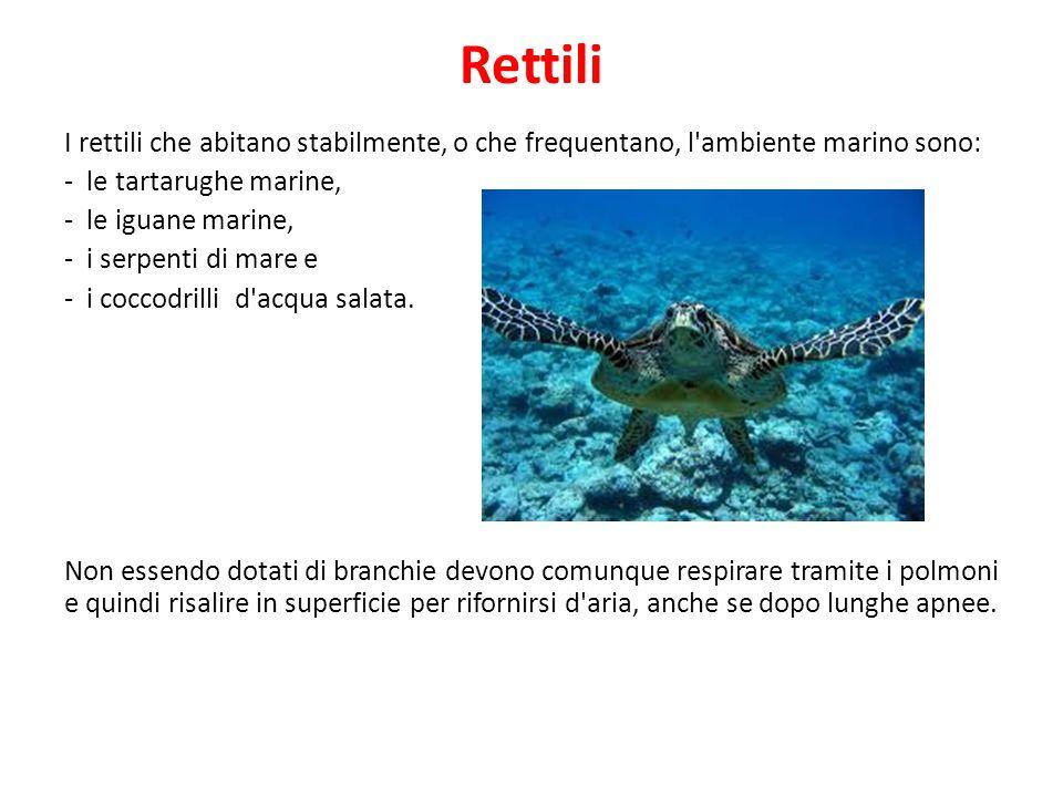 Rettili I rettili che abitano stabilmente, o che frequentano, l ambiente marino sono: - le tartarughe marine,