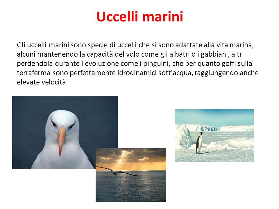Uccelli marini