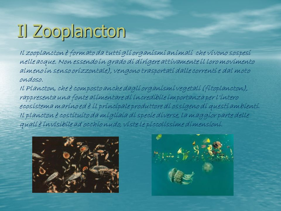 Il Zooplancton
