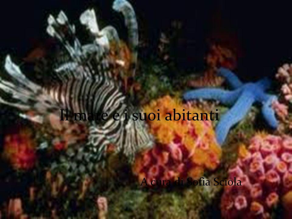 Il mare e i suoi abitanti