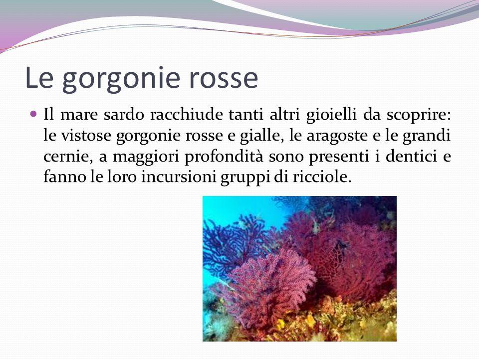 Le gorgonie rosse