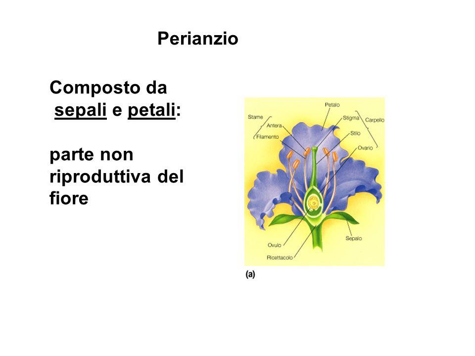 Perianzio Composto da sepali e petali: parte non riproduttiva del fiore