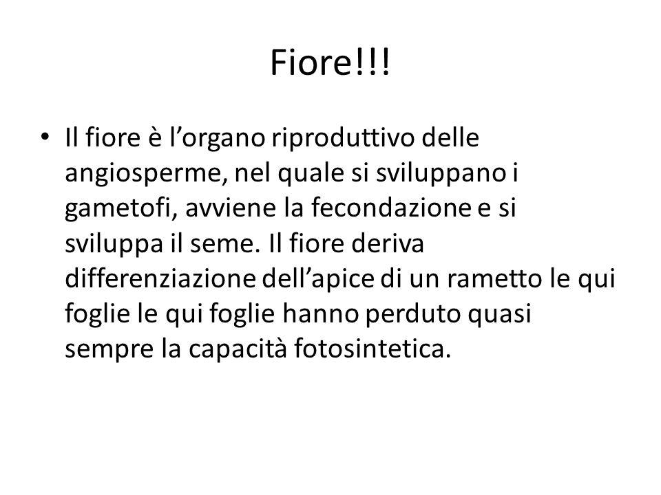 Fiore!!!