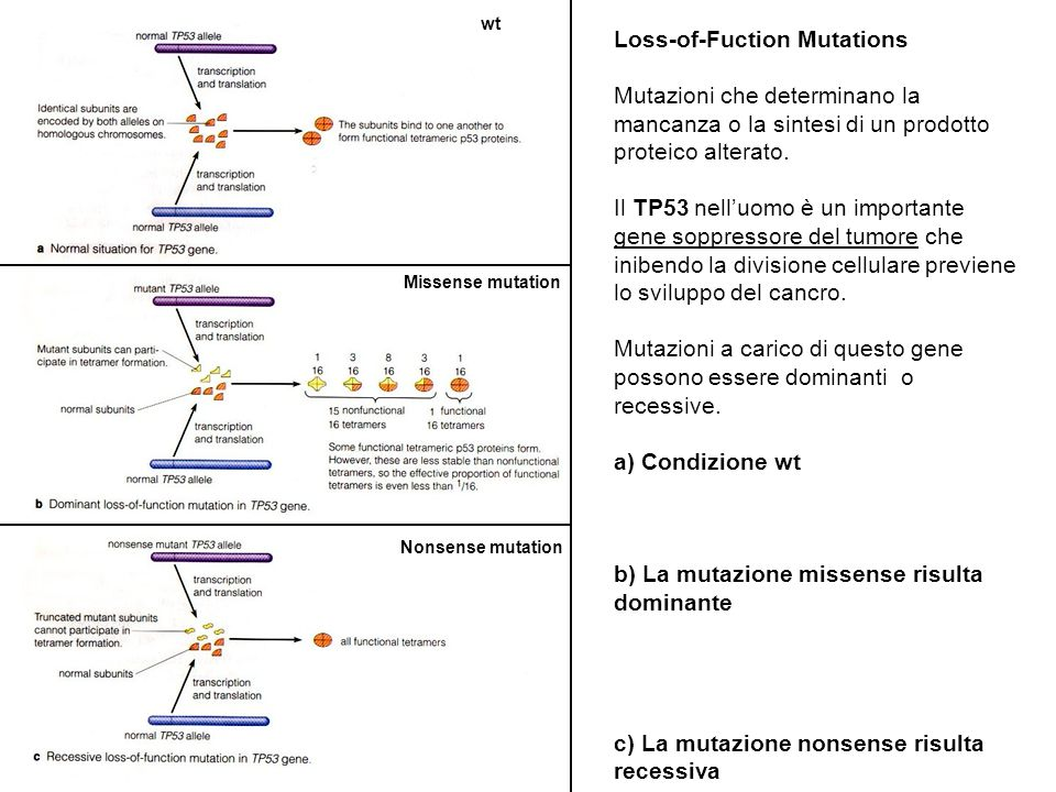 Loss-of-Fuction Mutations
