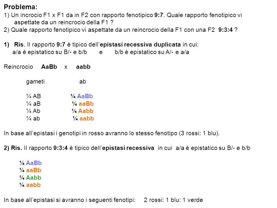 Problema: 1) Un incrocio F1 x F1 da in F2 con rapporto fenotipico 9:7. Quale rapporto fenotipico vi aspettate da un reincrocio della F1