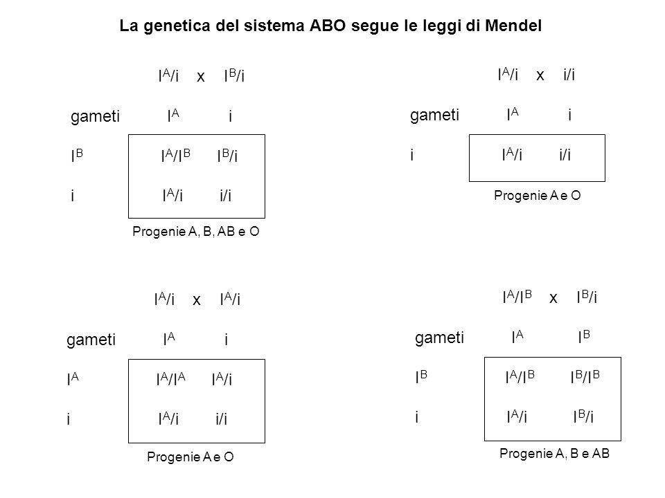 La genetica del sistema ABO segue le leggi di Mendel