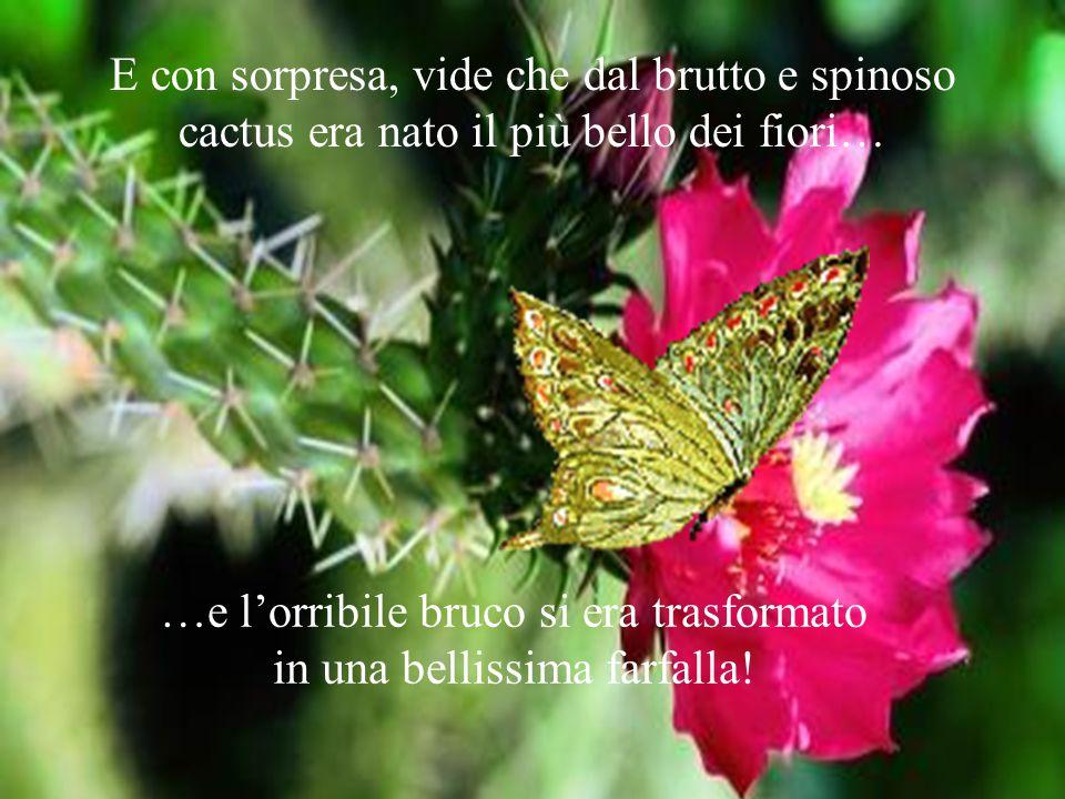 …e l'orribile bruco si era trasformato in una bellissima farfalla!