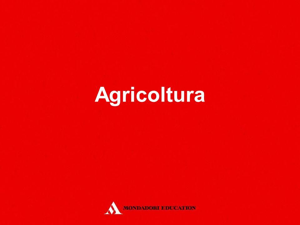 Agricoltura *