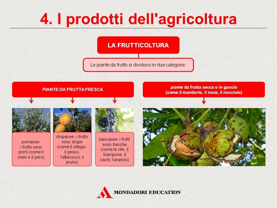 4. I prodotti dell agricoltura PIANTE DA FRUTTA FRESCA