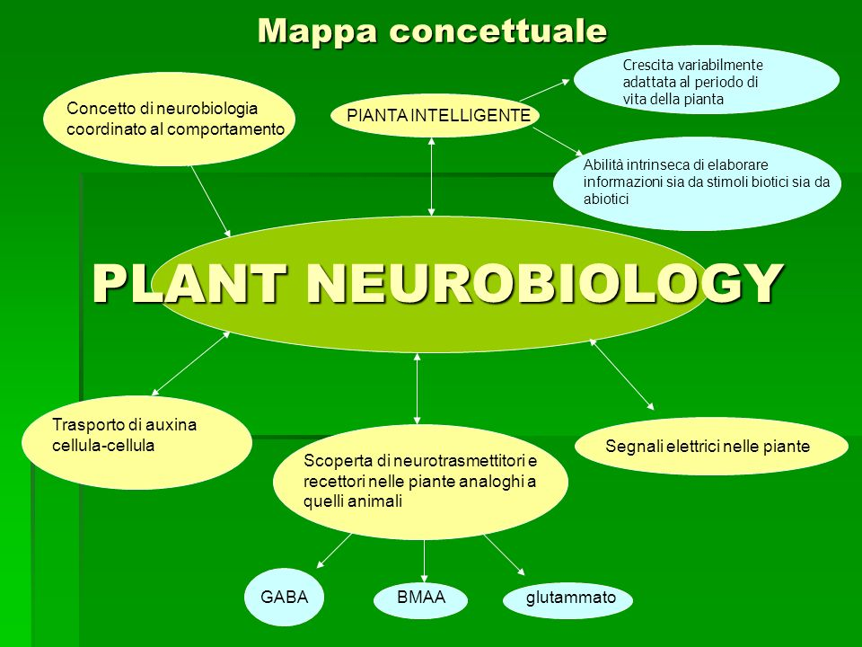 PLANT NEUROBIOLOGY Mappa concettuale