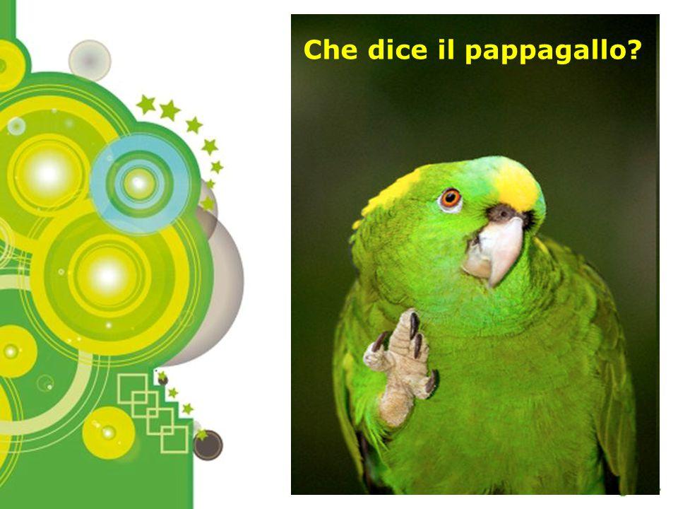 Che dice il pappagallo