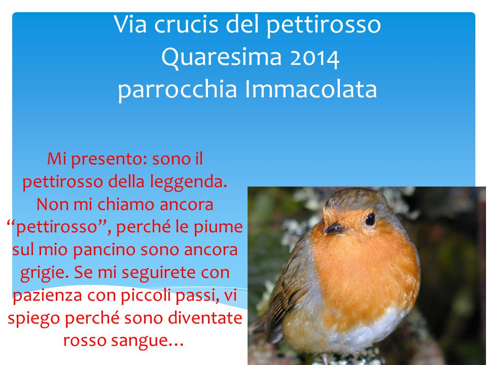 Via crucis del pettirosso Quaresima 2014 parrocchia Immacolata