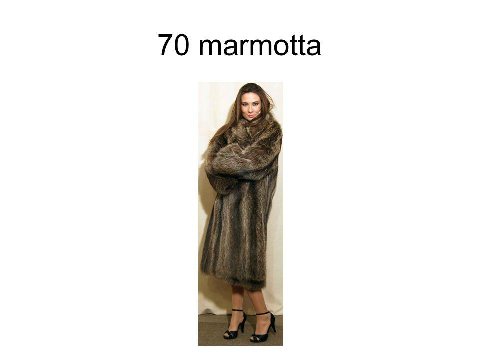 70 marmotta