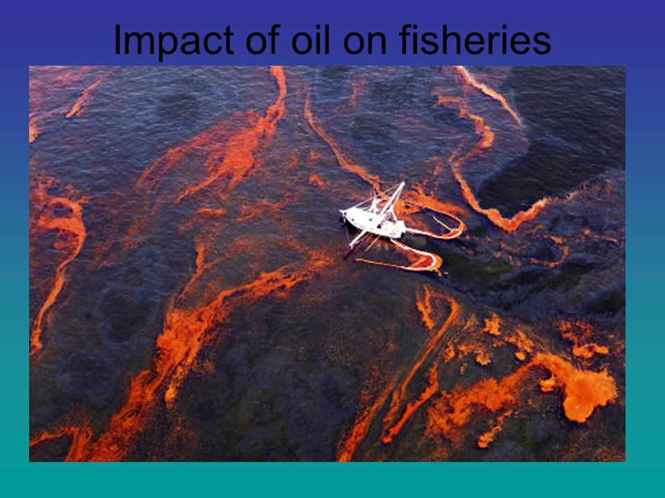 Impact of oil on fisheries