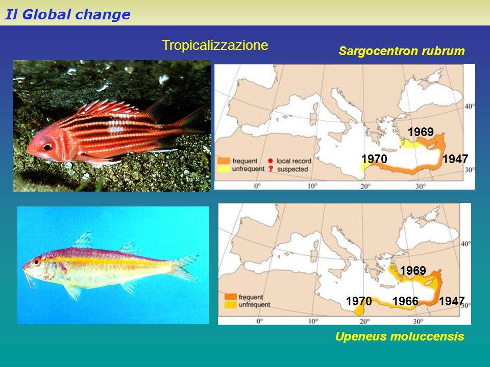 Il Global change Tropicalizzazione Sargocentron rubrum 1969 1970 1947