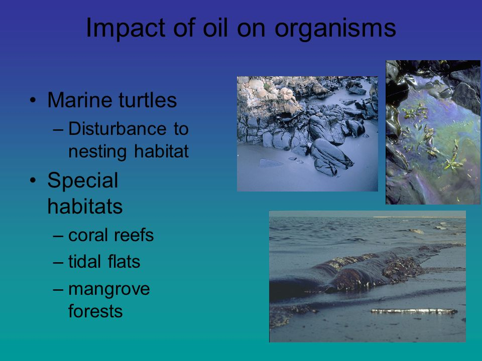 Impact of oil on organisms