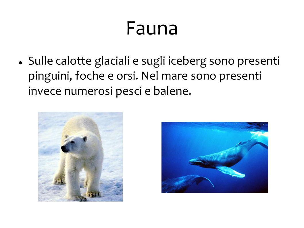 Fauna Sulle calotte glaciali e sugli iceberg sono presenti pinguini, foche e orsi.