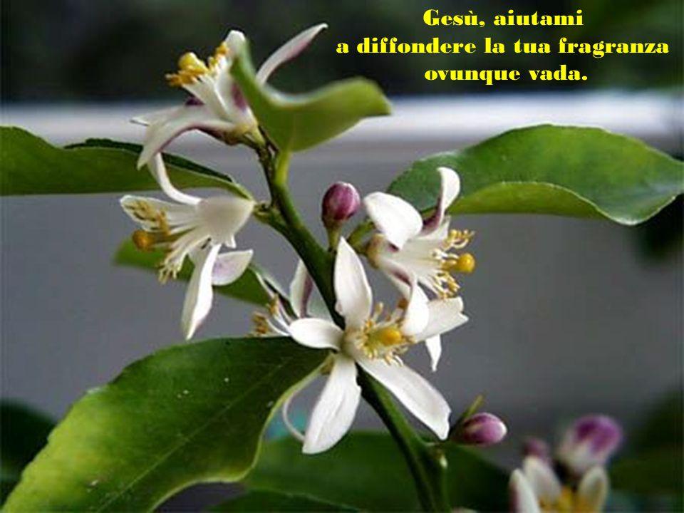 a diffondere la tua fragranza