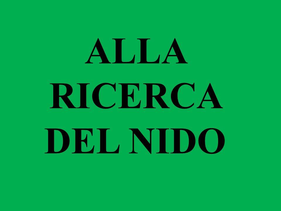 ALLA RICERCA DEL NIDO