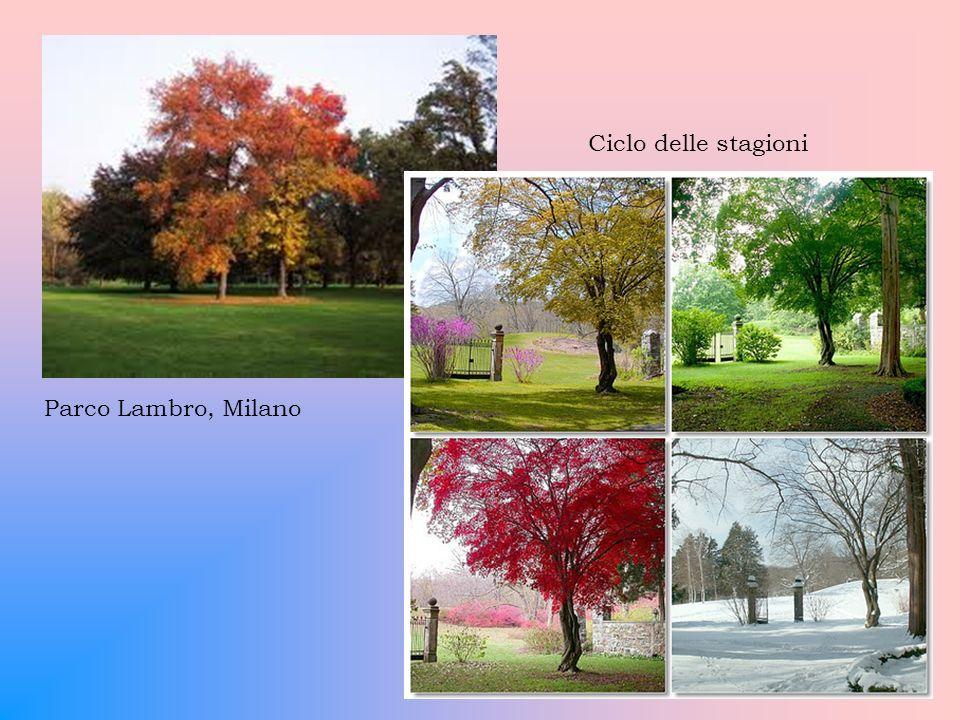 Ciclo delle stagioni Parco Lambro, Milano
