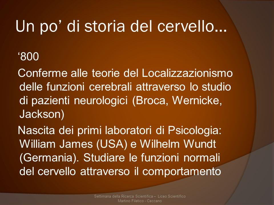 Un po' di storia del cervello…