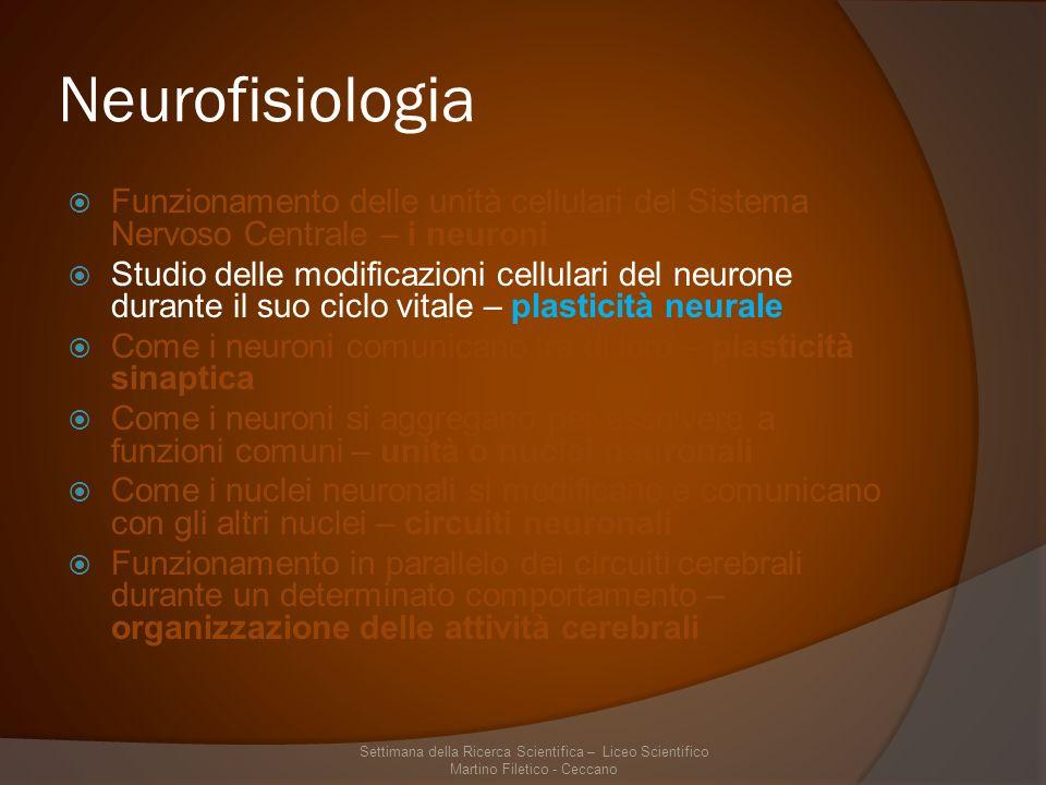 Neurofisiologia Funzionamento delle unità cellulari del Sistema Nervoso Centrale – i neuroni.
