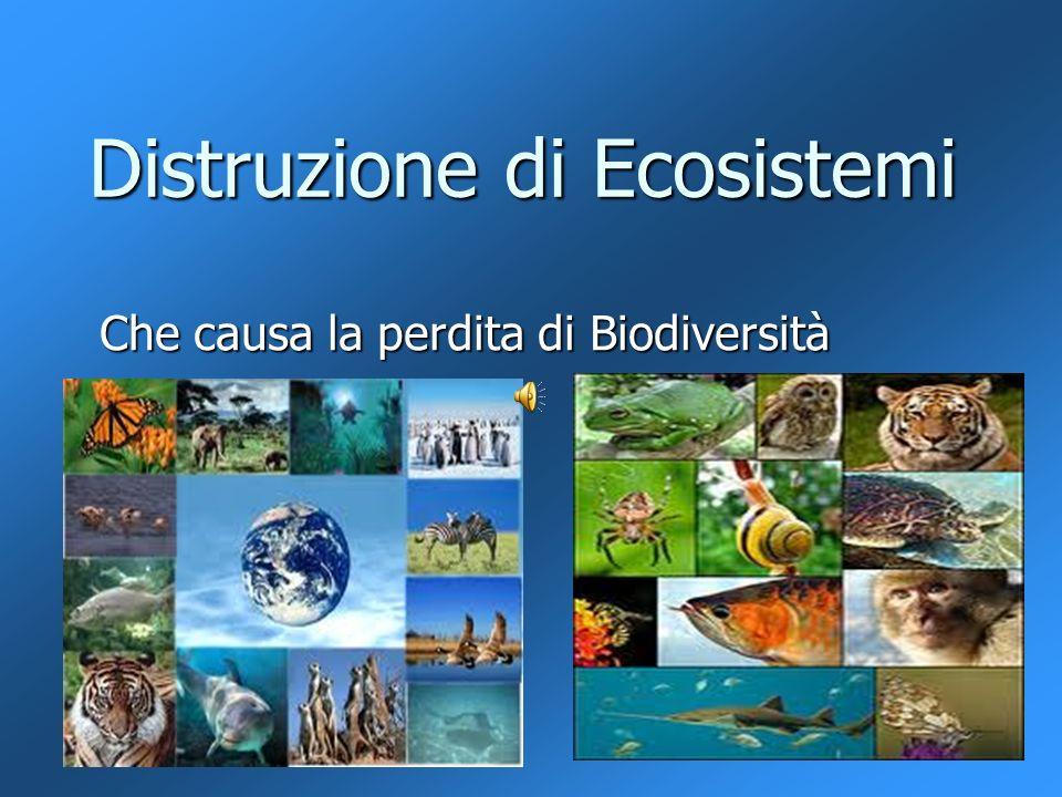 Distruzione di Ecosistemi