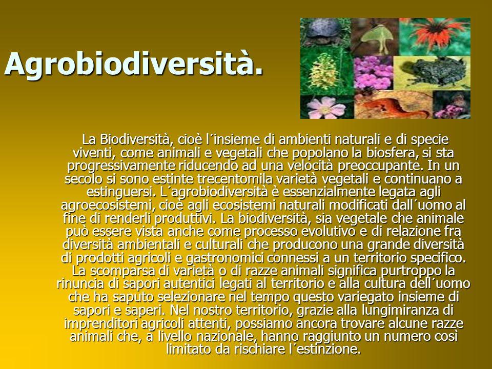 Agrobiodiversità.