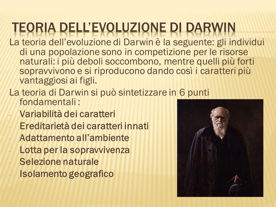 Teoria dell'evoluzione di darwin