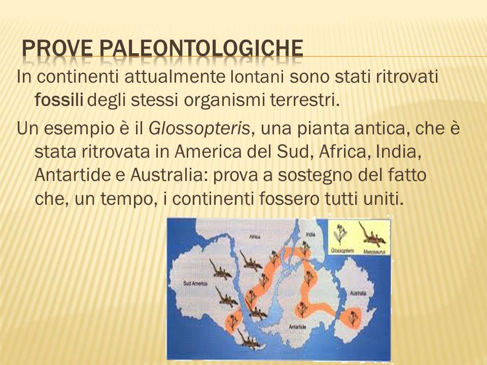 Prove paleontologiche
