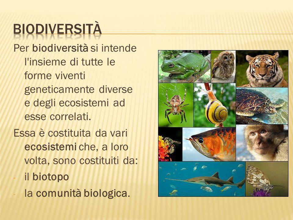 BiodiversitàPer biodiversità si intende l insieme di tutte le forme viventi geneticamente diverse e degli ecosistemi ad esse correlati.